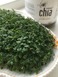 Sprouted Chia Seeds
